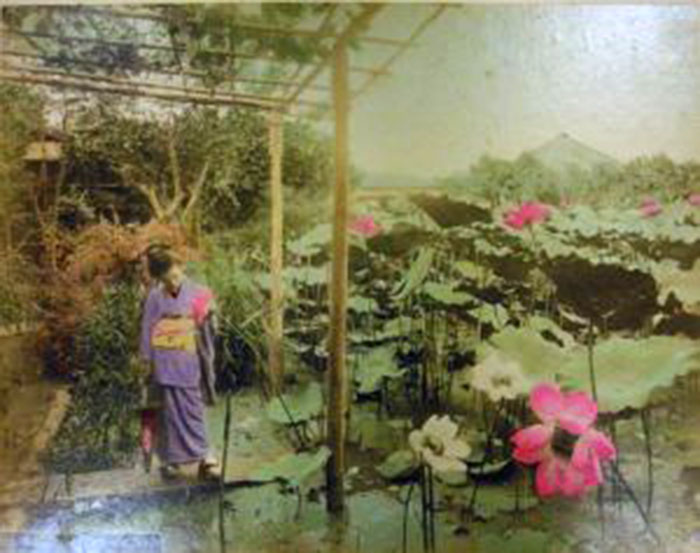 Iris flower garden at Horikiri, Tokyo